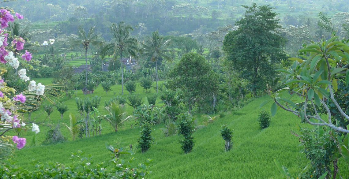 Shantiasa Bali View